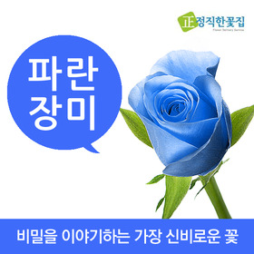 파란장미 꽃다발