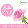 분홍장미 꽃다발